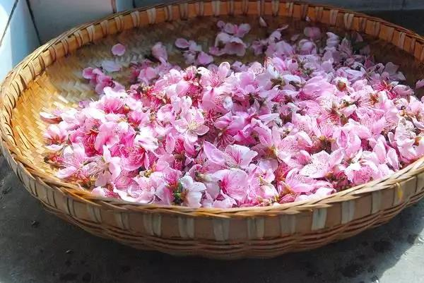 Peach blossom Petals and Buds