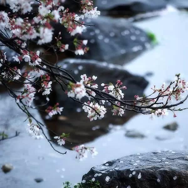 Peach blossom, rain solar term