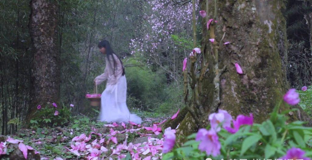 Li Ziqi, pick flowers
