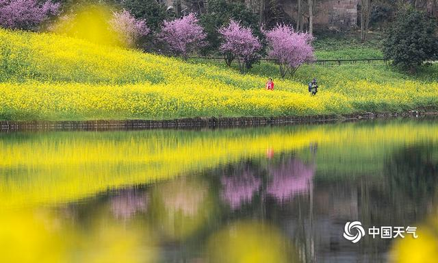 Chongqing Tianping Mountain, canola flower