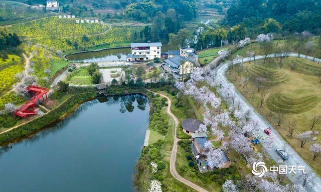 Chongqing Tianping Mountain, canola flower, Landscape